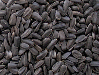 BLACK SUNFLOWER SEEDS 4KG
